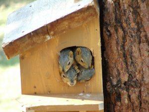 Squirrels. In a box.